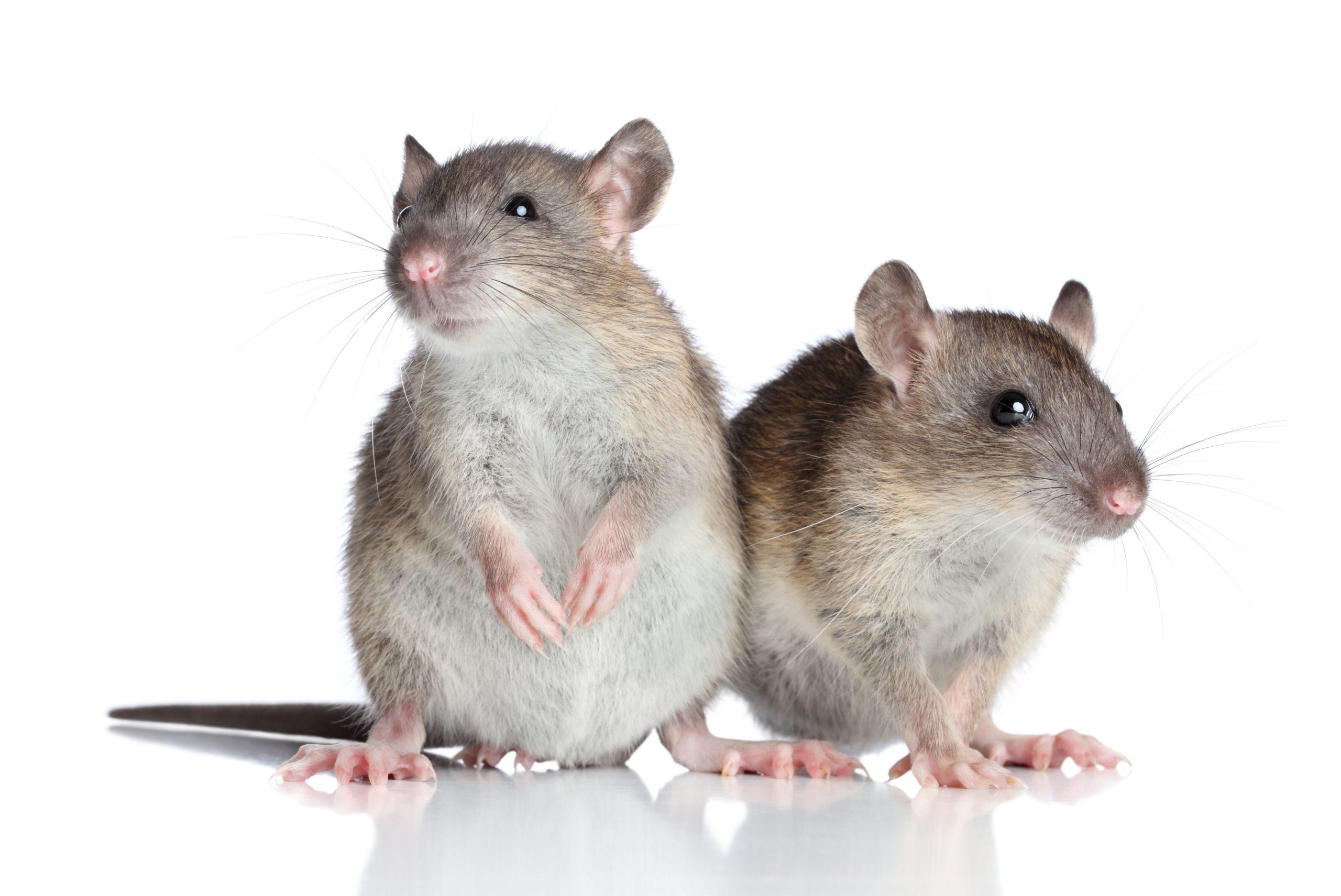 Control de plagas: las 3 plagas más comunes y cómo deshacerse de ellas