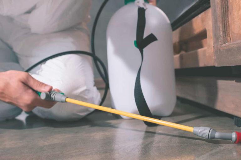 DESINTORRE Control de plagas: las 3 plagas más comunes y cómo deshacerse de ellas