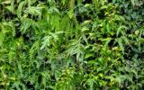 Inspiradoras ideas de diseño para jardines verticales