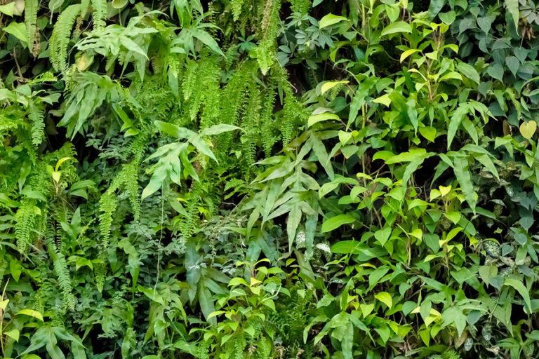 Por Vikenzo Nature: Inspiradoras ideas de diseño para jardines verticales